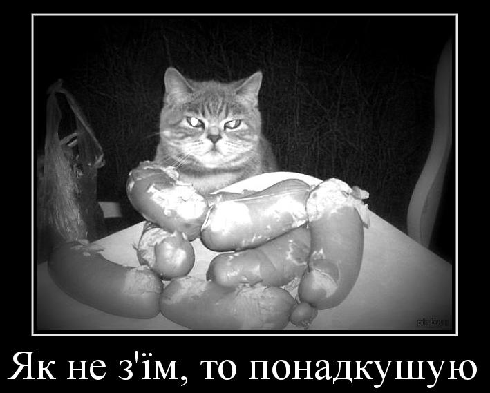 дем кіт